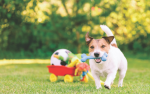 a dog playing with a toy