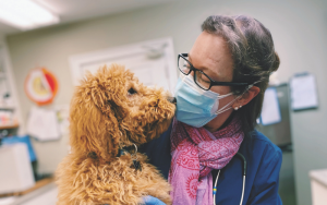 a dog and a veterinarian